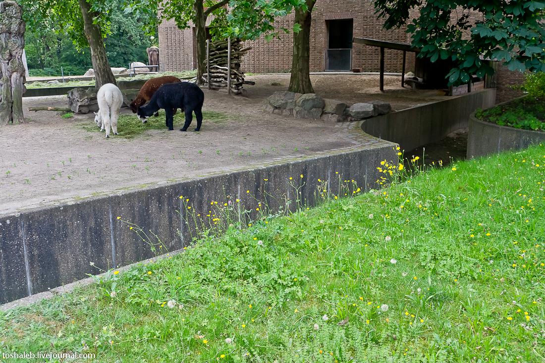 Берлин_зоопарк-16