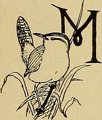 """Image from page 188 of """"Bird lore"""" (1899)"""