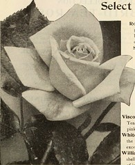 """Image from page 182 of """"Dreer's garden book 1915"""" (1915)"""