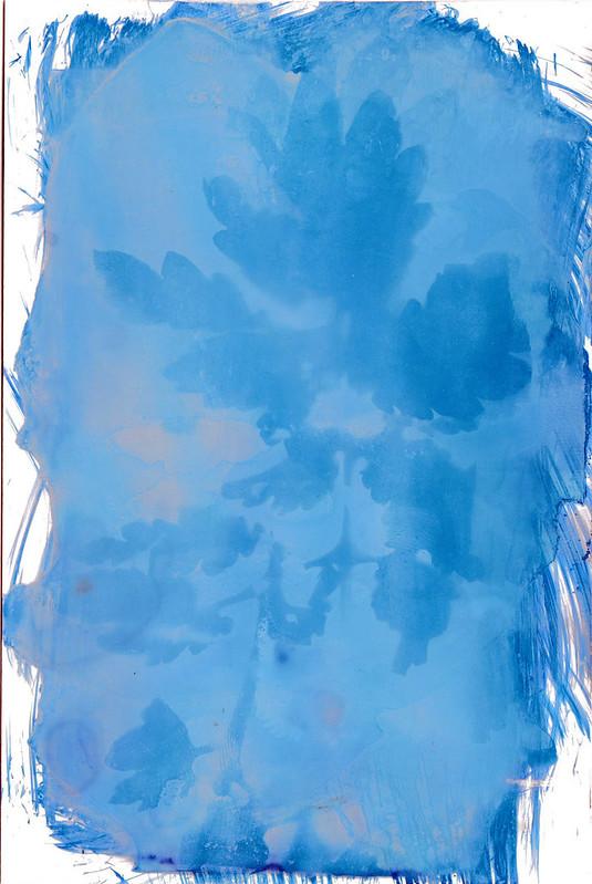 Blatt 1 Cyanotypie, solarisiert
