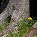 <p><a href=&quot;http://www.flickr.com/people/koons/&quot;>hkoons</a> posted a photo:</p>&#xA;&#xA;<p><a href=&quot;http://www.flickr.com/photos/koons/14896653109/&quot; title=&quot;Single Dandelion_4614&quot;><img src=&quot;http://farm6.staticflickr.com/5593/14896653109_96b286e75b_m.jpg&quot; width=&quot;240&quot; height=&quot;160&quot; alt=&quot;Single Dandelion_4614&quot; /></a></p>&#xA;&#xA;<p>A near hidden dandelion blossom.</p>