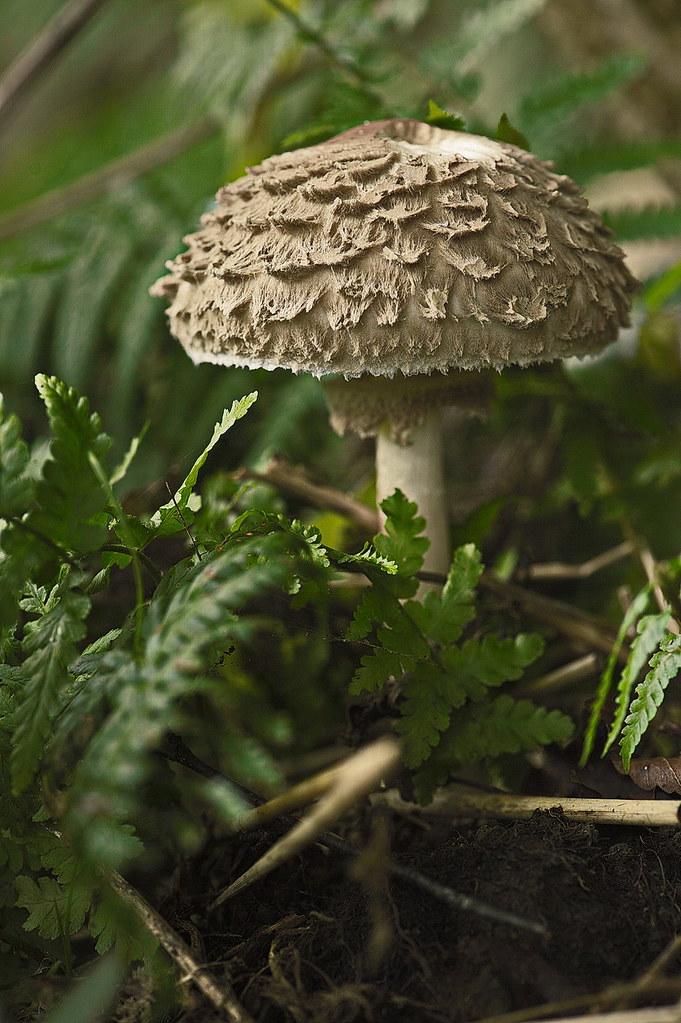 champignons 2 00677772