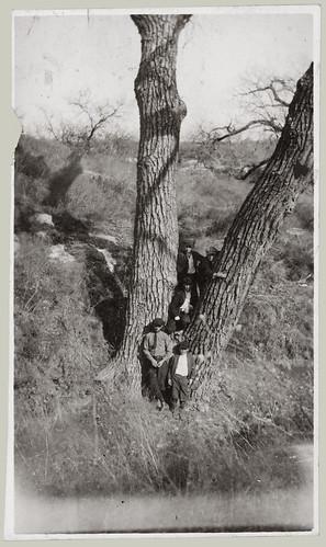 Men in a tree