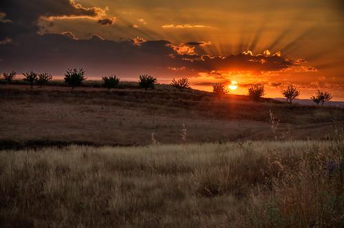 light sunset sky españa sun sol grass clouds landscape dawn spain paisaje zaragoza cielo olives campo orangesky olivos anochecer olivetrees hierba aragón