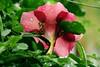 Flower rain,,,