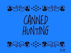 Buzzword Bingo: Canned Hunting = Trophy hunt in which an animal is kept in a confined area, increasing the likelihood of the hunter obtaining a kill @cannedlion