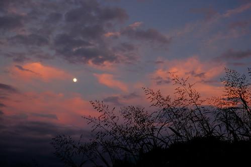 中秋の名月。の前日