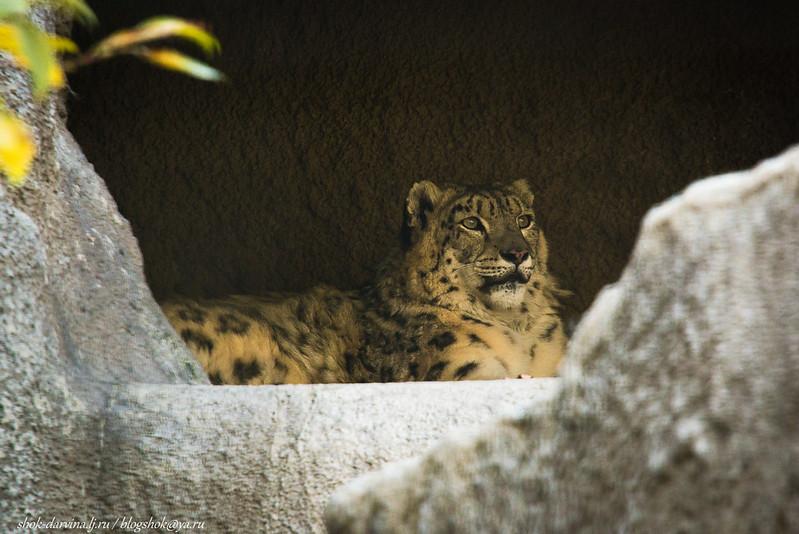 Zoo-18