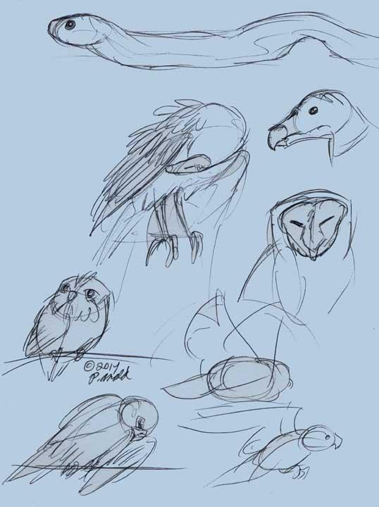 8.21.14 - Maine Wildlife Park Sketches