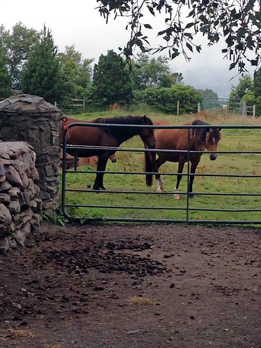 15255514102 1e428204cb The Ring of Kerry   Irlande