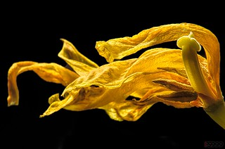 Yellow Flames