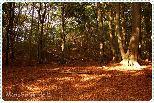 naar-het-bos-02
