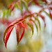 Change of Season by Wes Iversen