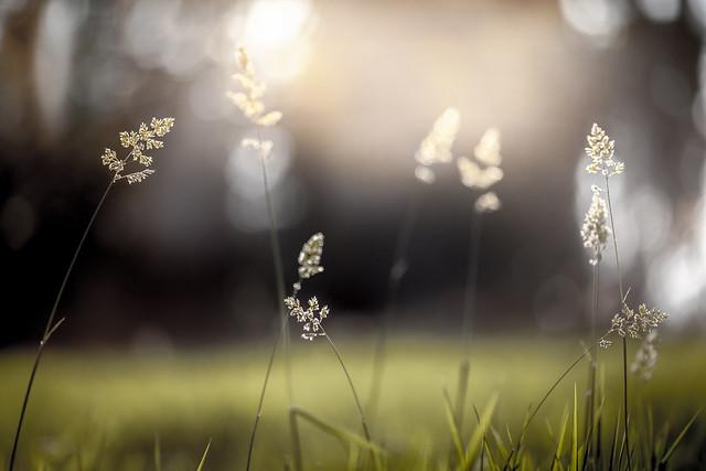autumn light 01