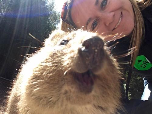 Quokka selfie!