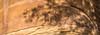 Panorama of Petroglyphs