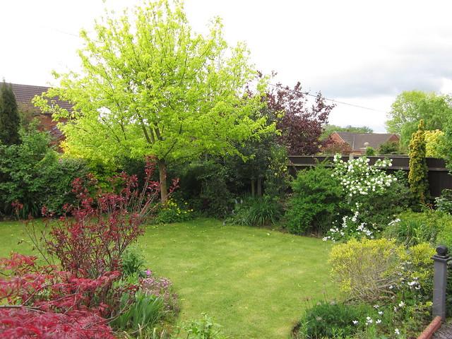May garden 11.05 (7)