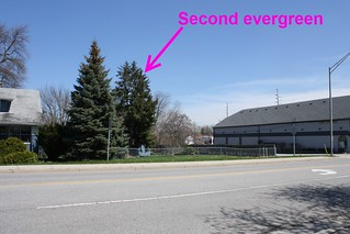 5-20-2014 Second evergreen