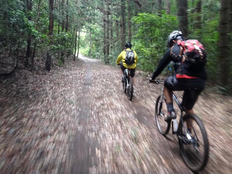 Forest Trail - Palen Creek
