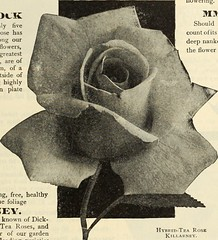 "Image from page 186 of ""Dreer's garden book 1915"" (1915)"