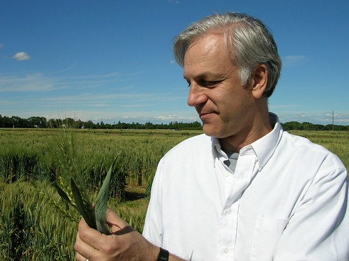 Jorge Dubcovsky, professor of plant sciences at the University of California–Davis (pictured), and fellow UC Davis researcher Clark Lagarias uncovered a key determinant in the time it takes wheat to flower. Their discovery could lead to further research that would allow wheat growers to produce greater yields to feed the world's growing population. Their work is published in this month's edition of edition of Proceedings of the National Academy of Sciences. Photo courtesy of Jorge Dubcovsky.