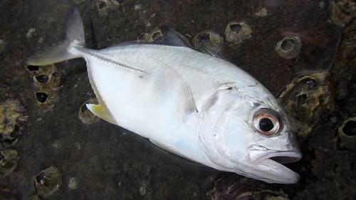 Koh Samui Fishing