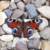 Butterfly on stones from my iPhone