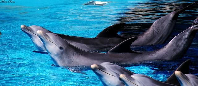 delfines nadando en los masres del hemisferio Norte