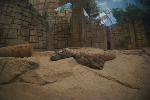 Tired Gila Monster in Mandalay Bay Shark Reef