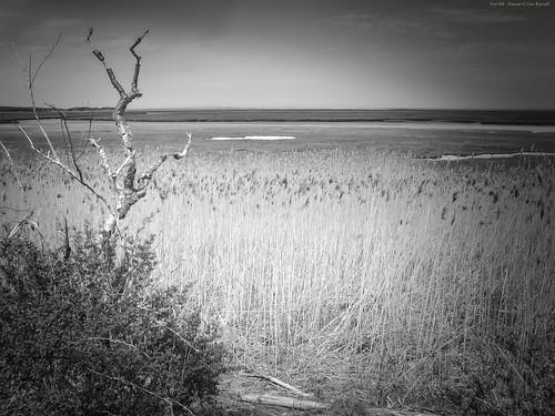 blackandwhite bw reflection green nature horizontal sunrise bay seascapes capecod massachusetts sandbar panoramic estuary silence inlet marsh skiff atlanticocean tidal cloudscape channel saltmarsh mudflat contemplation eastham tranquilscene sedge nationalseashore forthill penniman nauticalvessel