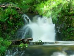Savoureuse river in Lepuix