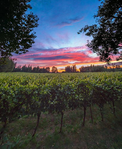 sunset nature oregon vineyards grapes mcmenamins edgefield troutdale