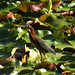 green heron at Shawnee Park on my birthday by gurdonark