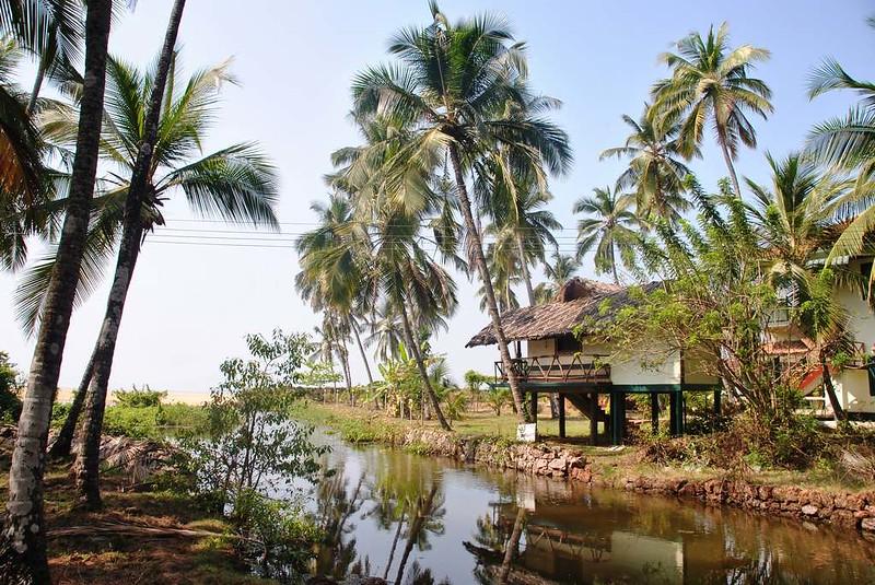 01 Totaima (Kerala) (66)