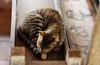 Tempal cat