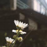Flower @ Dezső Pais Elementary School