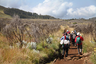 Making our way down the mountain on the last day (Mt. Kilimanjaro, Tanzania)