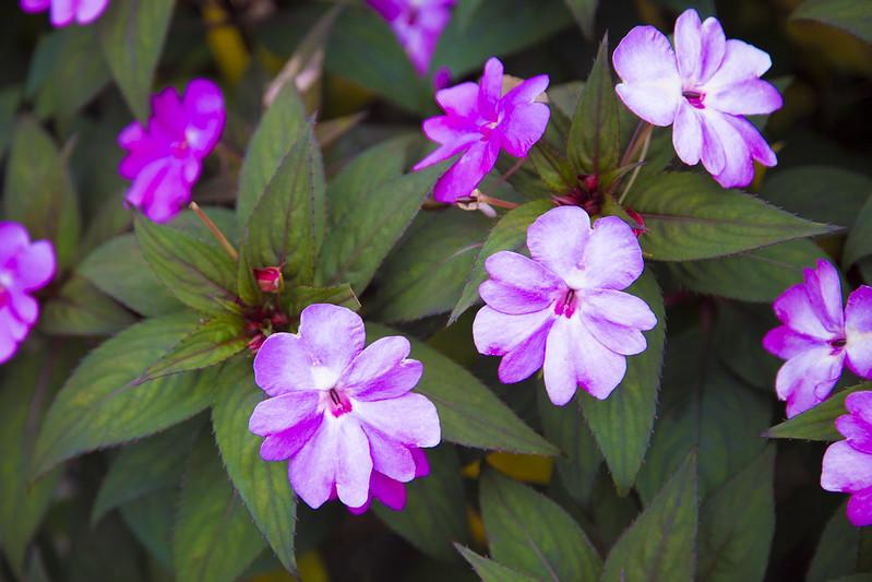 六甲ガーデンテラス・植物園52