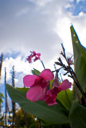 park pink flower macro green gardens swansea wales clouds botanical photography flora nikon south documentary fisheye af 020 singleton opteka d3000