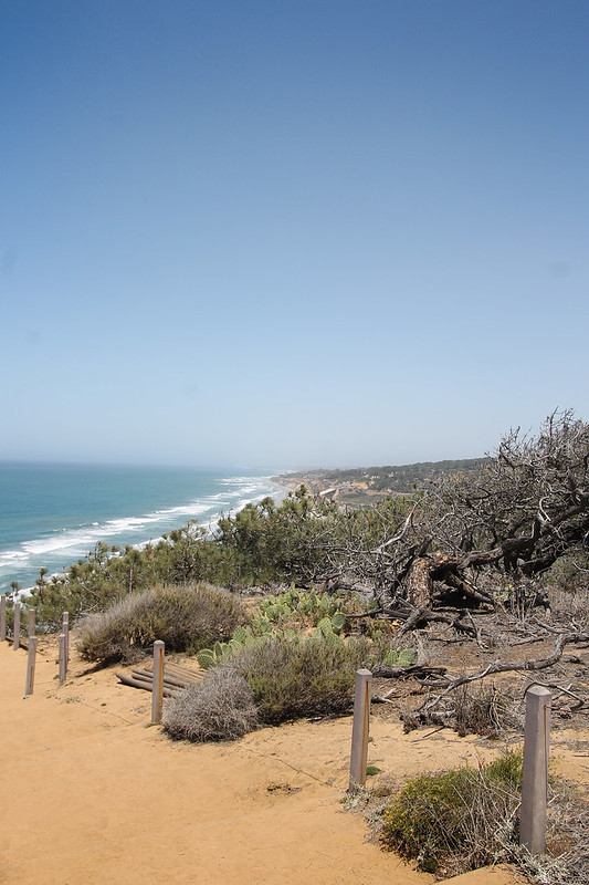 Torrey Pines State Reserve