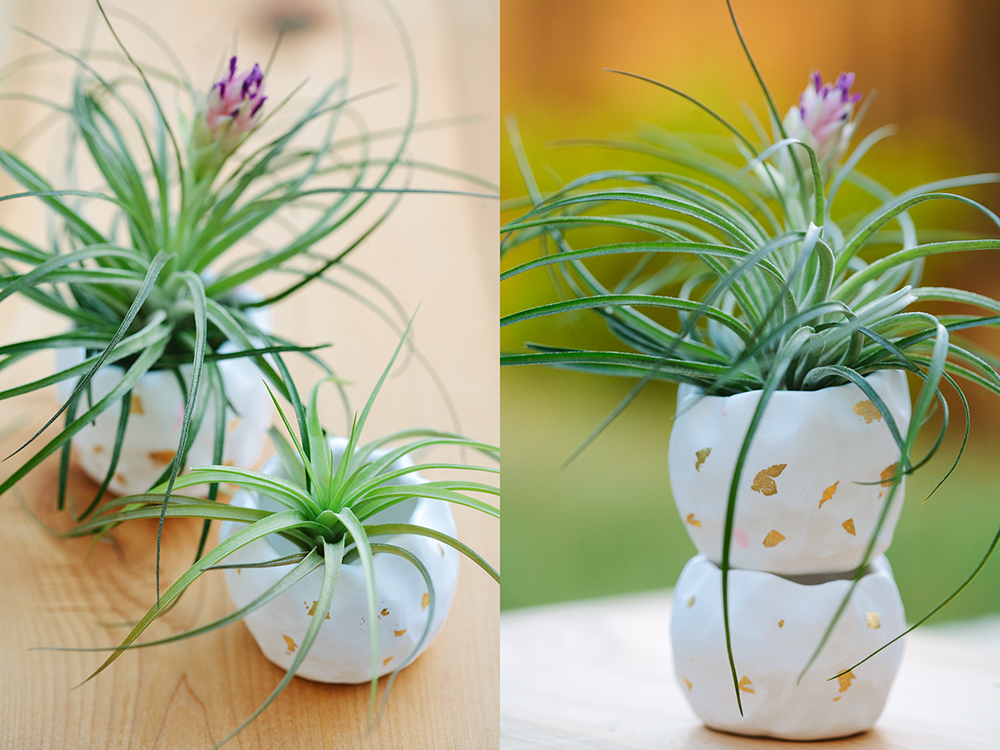 airplants_6_web