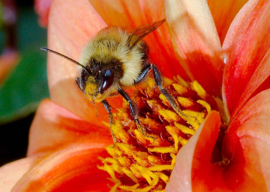 Bee_11