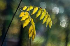 Autumn time 0.16