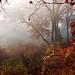 Autumn Morning - Film by Trish P. - K1000 Gal