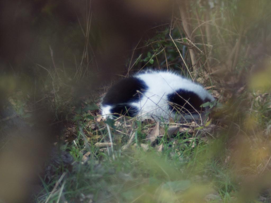 Stray cat(f/1.4)