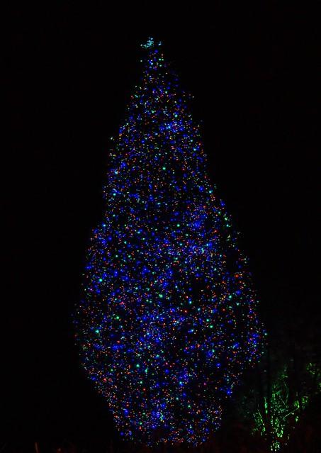 Tree Lights, Towell House, Belfast