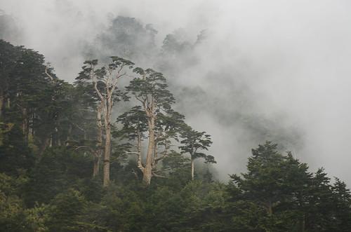 Mist lingering