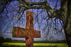 The Cross and the Tree