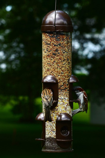 Birds in the Feeder