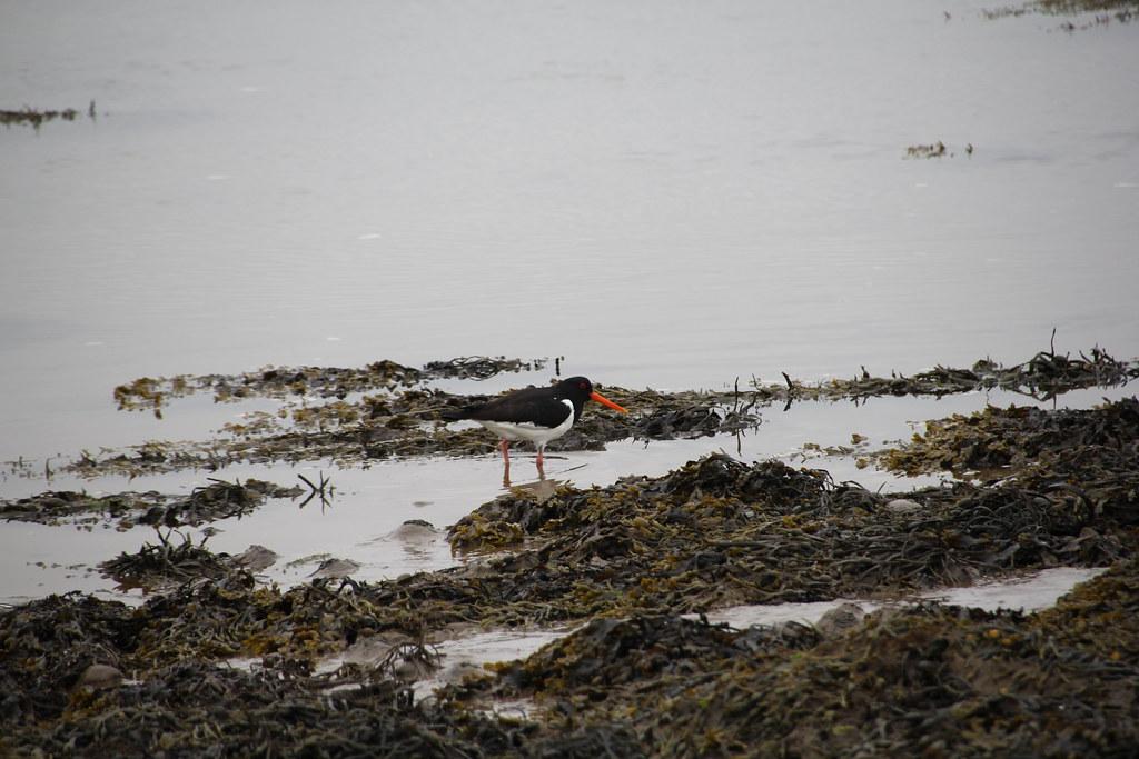 aldingham, roa island, piel island, barrow in furness
